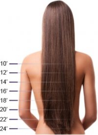 medium_hairlengthguide